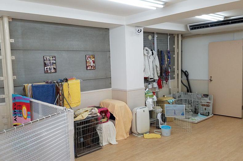 老犬ホーム 新宿