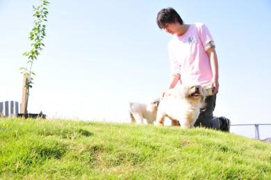 老犬ホームセラピー