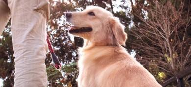 老犬介護ドットコム