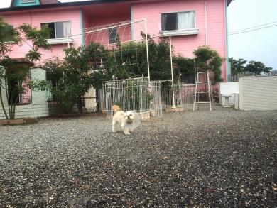 老犬ホームセラピー入居