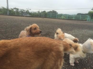老犬ホームセラピー香川
