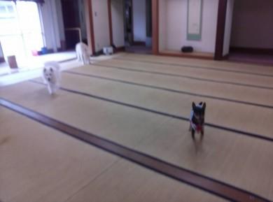 群馬 老犬ホーム