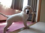老犬介護ホーム 寶ホテル