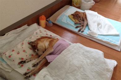 リュッカ 老犬訪問介護対応