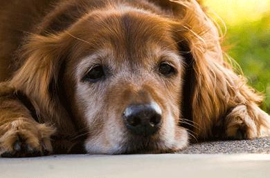 ぴりかのもり 老犬訪問介護対応