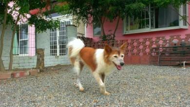 老犬ホームセラピー03