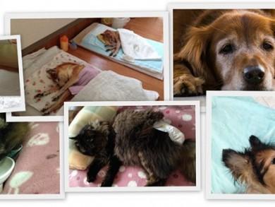 老犬デイケア・老犬訪問介護