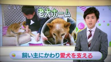老犬ホームぱーとなー NHK
