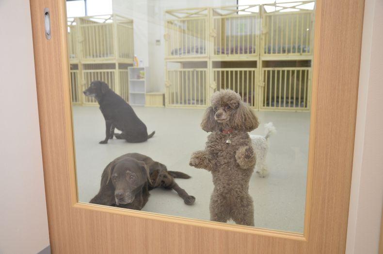老犬介護ホームメロー 老犬