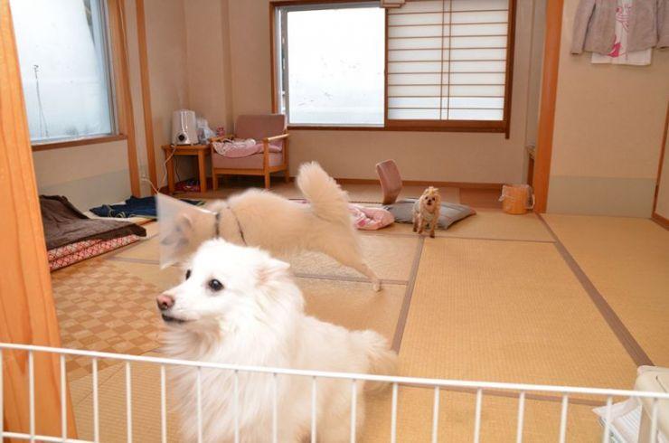 老犬介護ホーム みなかみ宝ホテル