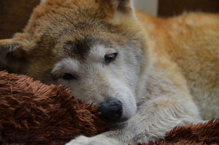 老犬ホーム熊本